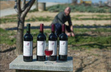 Vini Azienda agricola Martinotti